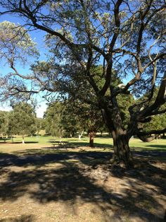 """See 1088 photos and 65 tips from 4796 visitors to Centennial Park. """"Great area for exercising not so far from the city. Centennial Park, Wedding Spot, Sydney, Sidewalk, Country Roads, City, Beautiful, Side Walkway, Walkway"""