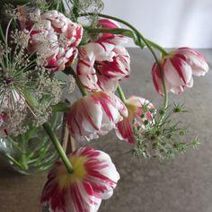 tulips. Carnaval de nice.