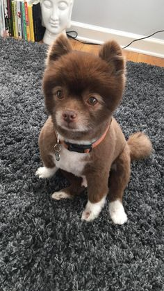 Thanks Reddit for letting me know I own a bear. it all makes sense now #aww #cute #cutecats #dinkydogs #animalsofpinterest #cuddle #fluffy #animals #pets #bestfriend #boopthesnoot