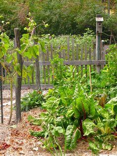 Pretty Potager: Carol Hillman's Kitchen Garden with a Rustic Fence, Birdhouse, Raised Mound Planting Beds. Charming. Photographs: Michaela Medina - thegardenerseden.com