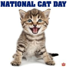 National Cat Day. Enter YOUR Cat for a chance to win FREE Chips!