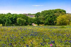Bluebonnet Trail, Sugar Ridge Road, Ennis, TX