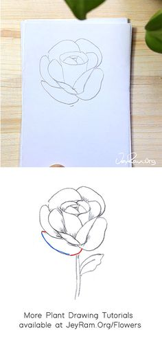 How to Draw a Rose : Step by Step for Beginners — JeyRam Art - Landlikes Sites Leaf Drawing, Floral Drawing, Baby Drawing, Plant Drawing, Roses Drawing Tutorial, Flower Drawing Tutorials, Rose Tutorial, Art Tutorials, Drawing For Beginners
