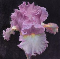 "Daily Paintworks - ""Iris"" - Original Fine Art for Sale - © Yuehua He"