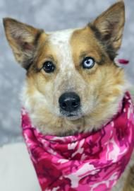 Dudley is one of our adoptable dogs. Click on her picture to see if she is still available.