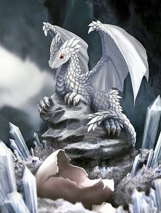 You know what's better than a cute baby-dragon? that's right, two baby-dragons :v So here's another one! Known as the frost-dragon! Discovering a new world Magical Creatures, Fantasy Creatures, Beautiful Creatures, Dragon's Lair, Dragon Artwork, Dragon Pictures, White Dragon, Silver Dragon, Mythological Creatures