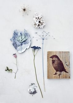 bird and flowers watercolour and litho print inspiration Nature Collection, Colours, Crafty, Inspiration, Drawings, Floral, Prints, Artwork, Vintage