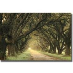 William Guion 'Evergreen Alley' Canvas Art | Overstock.com Shopping - Top Rated Canvas