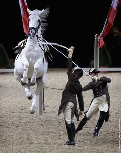 spanish riding school performances | Spanish Riding School Of Vienna – Gala Performance