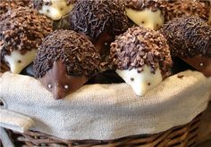 chocolate hedgie noms