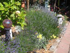 2014 BBY - Dennis' garden Garden Crafts, Plants, Plant Sale, Backyard Garden, Master Gardener, Ornamental Plants, Garden Tours, Backyard