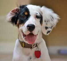 all ears ...