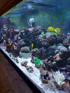 102 best saltwater tanks images on pinterest saltwater aquarium