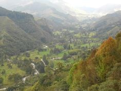 Valle de Cocora - Salento - Departamento del Quindío  (Colombia)