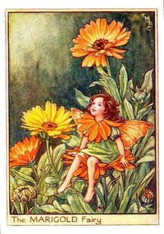 The Marigold Fairy. Vintage flower fairy art by Cicely Mary Barker. Taken from 'Flower Fairies of the Garden'. Click through to the link to see the accompanying poem. Cicely Mary Barker, Elfen Fantasy, Fantasy Art, Vintage Wall Art, Vintage Prints, Flower Fairies Books, Fairies Garden, Marigold Flower, Marigold Tattoo