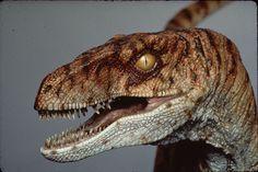 The Lost World Jurassic Park male Velociraptor maquette
