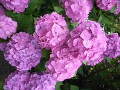 Hydrangea, Pesto, Diy And Crafts, Vegetables, Flowers, Plants, Gardening, Sad, Scrappy Quilts