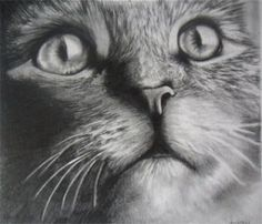 Profile of the Week: Aubrey Campbell - The Art Colony dibujo de, de animal, beautious inspir, art coloni, pencil sketch, graphit pencil