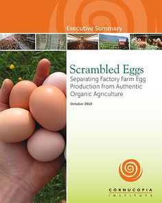 Organic Egg Report and Scorecard, animal welfare, animal cruelty, factory farming, health, food safety, food, chickens, hens, eggs