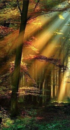 A sinking sun splintered the forest into matchsticks of light, holding a silent hand to embrace the cloak of twilight.  Love is Ageless http://www.susanhaught.com