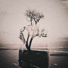Inner Landscape 3