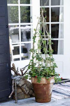 Klart for klatreplanter i espalier Greenhouse Gardening, Container Gardening, Small Gardens, Outdoor Gardens, Indoor Outdoor Fireplaces, Cottage Garden Design, Flowering Vines, Edible Garden, Garden Projects
