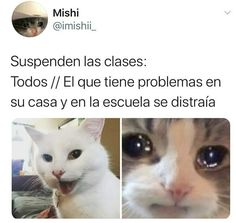 Funny Spanish Memes, Stupid Funny Memes, Funny Quotes, Crazy Quotes, Sweet Quotes, Best Memes, Dankest Memes, Miraculous Ladybug Memes, Clean Memes