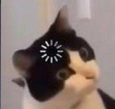 Gracioso Cute Cat Memes, Funny Animal Jokes, Really Funny Memes, Cute Funny Animals, Animal Memes, Funny Cute, Funny Science Jokes, Funny Emoji, Funny Profile Pictures