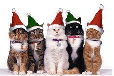 koty na święta - Szukaj w Google