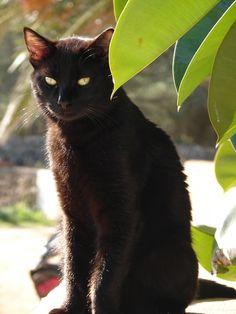 ☆ I love black cats.。By Artist Roser Portella ☆