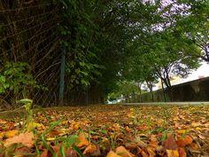 Outono   por valtencirmoraes