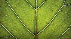 Image result for leaf photography