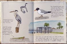 Sketching in Nature: from Ingleside on the Bay, Texas