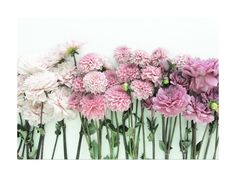 Ombre Blooms Wall Art Prints by Kate Wong | Minted