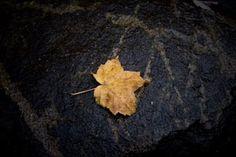 Minéral Photo D Art, Meat, Artists, Fall Season