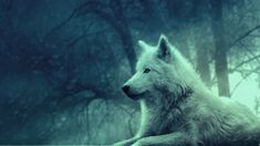 2048x1152 Wallpaper wolf, light, forest, wild, calm, peace