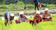 I recently visited Ropain aka the rice planting festival in Nepal. Here's my experience along with some photos from the celebration. Nepal, Pictures, Photos, Celebrities, Planting, Software, Rice, Happy, Travel
