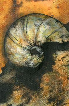 Ammonite by Jo Sheppard Spirals In Nature, Gcse Art Sketchbook, Past Present Future, Seashell Art, Beautiful Fish, Ammonite, Patterns In Nature, Natural Forms, Sea Shells