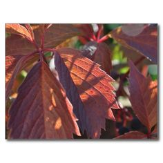Autumn Leaves Postcard. Click to buy from my Zazzle store.