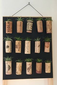 Air Plants in Wine Cork Magnets // Wine Cork Gift // Wedding Plant Favors // Air Plant Set // Air Plant Holder // Mother's Day // mom gift Wedding Shower Favors, Gift Wedding, Rustic Wedding, Bridal Shower, Baby Shower, Wine Cork Crafts, Gifts For Wine Lovers, Wine Gifts, Plant Holders