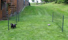Paws Away! Choosing A Portable Dog Fence - WOOF!