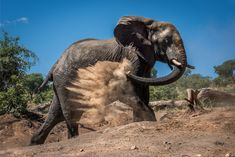 An elephant sprays itself with dust in this National Geographic Your Shot Photo of the Day.