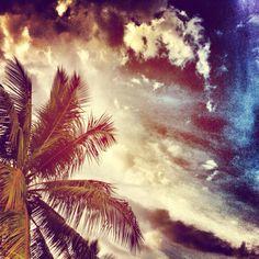 Tropical colors.