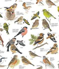Vogelposter (Ausschnitt)