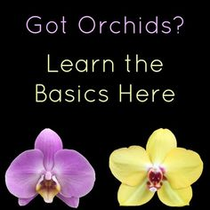 Growing Orchids For Beginners - Orchid Care Instructions & Tips Orchid Plant Care, Orchid Plants, Orchid Repotting, Orchid Propagation, Orchid Leaves, Growing Orchids, Growing Plants, Growing Vegetables, Nail Swag