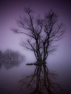 Purple.  By Mark Littlejohn:    http://photographershalloffame.blog.com/outstanding,photographers,best,fame/mark-littlejohn/