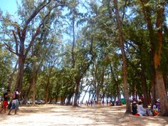 You'll be hard pressed to go on holiday to Mauritius and not hear something about Flic en Flac beach, one of the island's most popular beaches. Mauritius Travel, Hard Pressed, Going On Holiday, Dolores Park, Street View, Island, World, Beach, The Beach