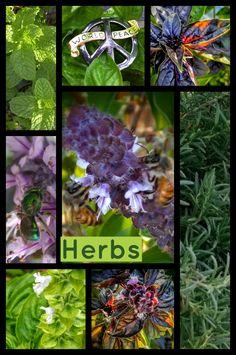 Some herbs from the garden...November 28, 2016