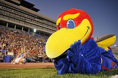 Baby Jay of the Kansas Jayhawks - she and Big Jay are two of the most well-known mascots in college sports. State Of Kansas, University Of Kansas, Kansas City, Ku Football, Kansas Basketball, Ku Sports, Sports Teams, J Birds, Go Ku