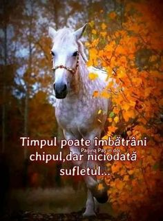 Horses, Quotes, Hip Bones, Profile, Quotations, Horse, Qoutes, Manager Quotes